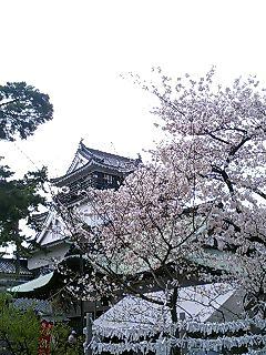 岡崎城だす